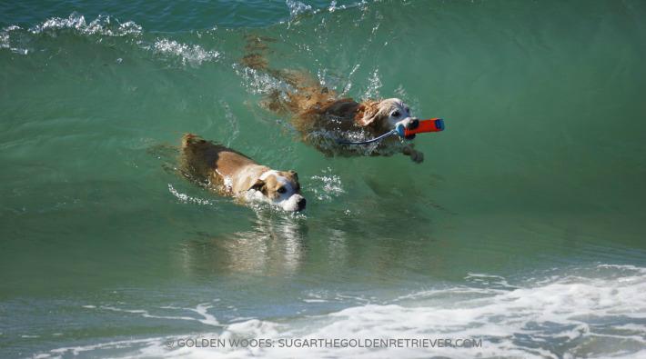 3 dog friendly beaches in orange county golden woofs