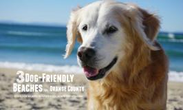 3 Dog-friendly Beaches in Orange County