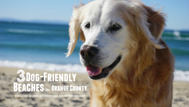 3 Dog-friendly Beaches in Orange County