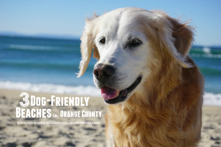 3 Dog friendly Beaches in Orange County