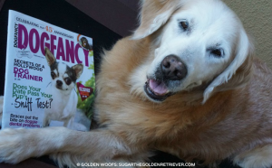 Golden Woofs in Dog Fancy Magazine