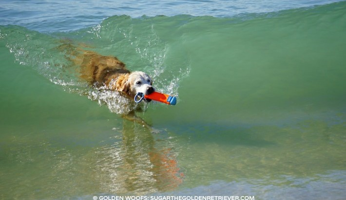 Surf Up! Shake It Off!