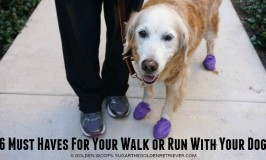 Must Haves Walk Run With Your Dog