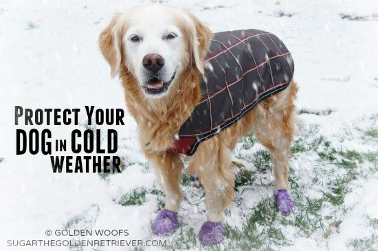 Protect Your Dog from Cold Weather