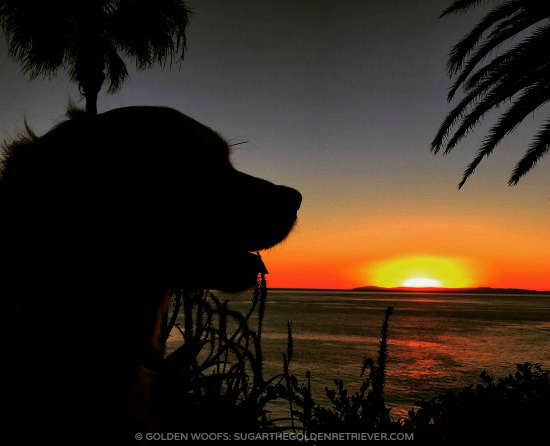Sunset Dog Silhouette Dog friendly Laguna Beach