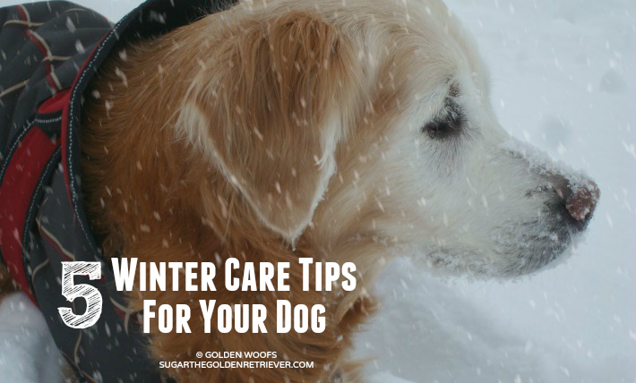 5 Winter Care Tips For Your Dog