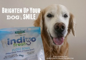 Brighten Up Your Dog's SMILE!