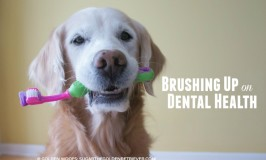Dental Health PetPlan