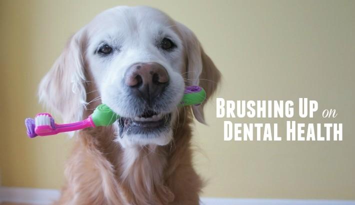 Brushing Up on Dental Health