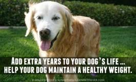 Healthy Dog Weight #PerfectWeight