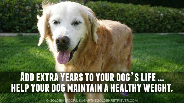 Simple Steps to Healthy Dog Weight Loss #PerfectWeight
