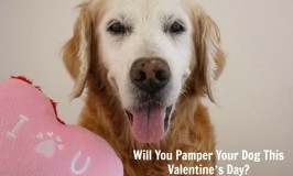 Pamper Your Dog This Valentine's Day