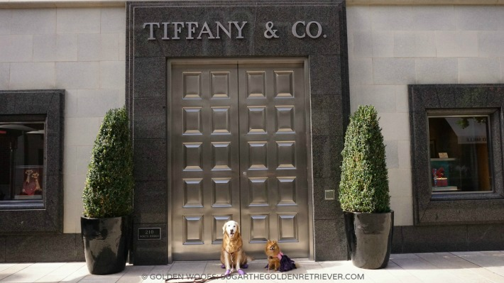 DOGS Tiffany Beverly Hills Rodeo Drive