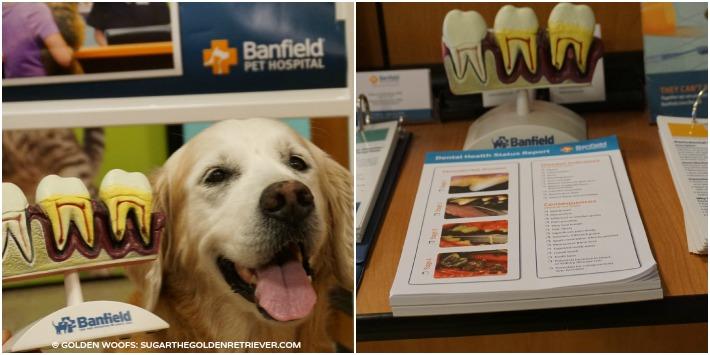 Banfield Pet Hospital Pet Dental