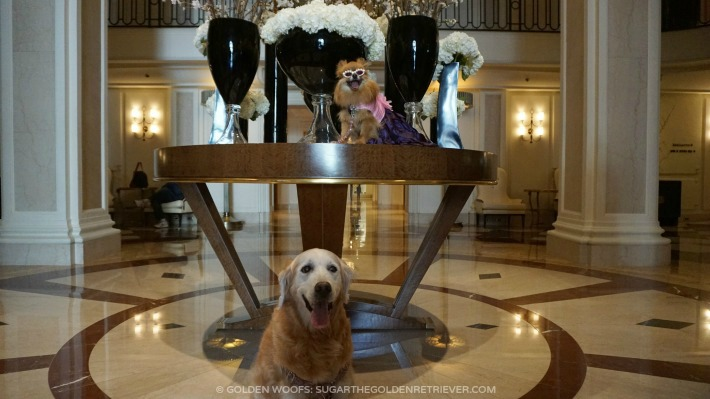 Beverly Wilshire Hotel Dog-friendly
