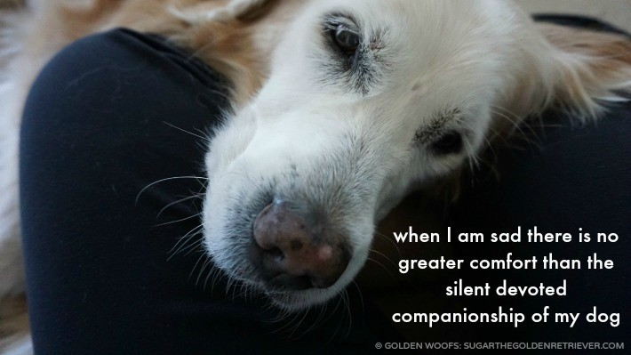 {This Moment} See Beautiful: Dog's Comfort
