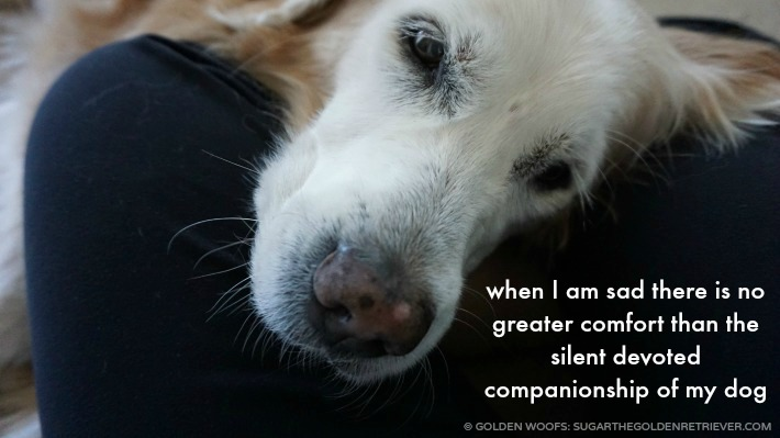 Dog's Comfort