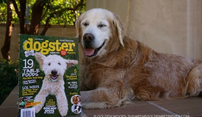What's Sugar Reading? Dogster Magazine