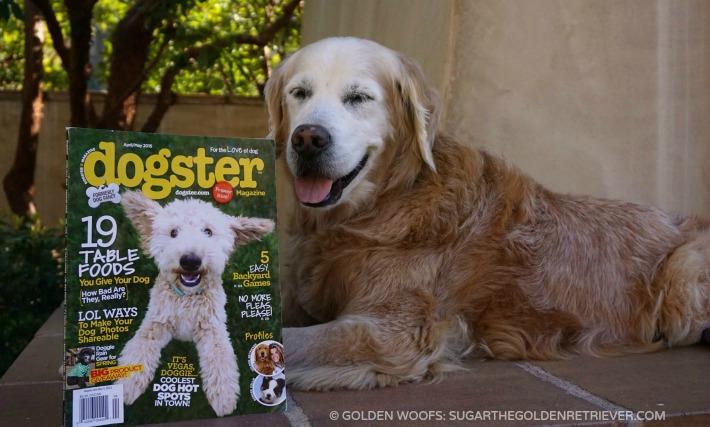 Dogster Magazine Premier Issue
