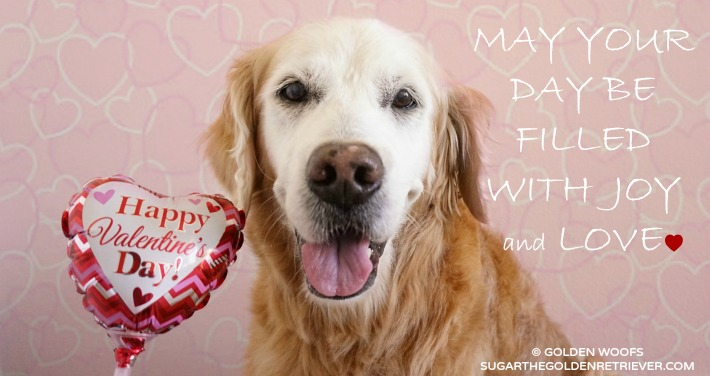Valentine's Day : Valentine DOG
