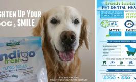 PetSafe Pet Dental Health Infographic