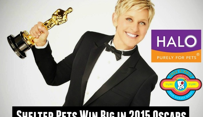 Shelter Pets Win Big in 2015 Oscars Swag from Halo