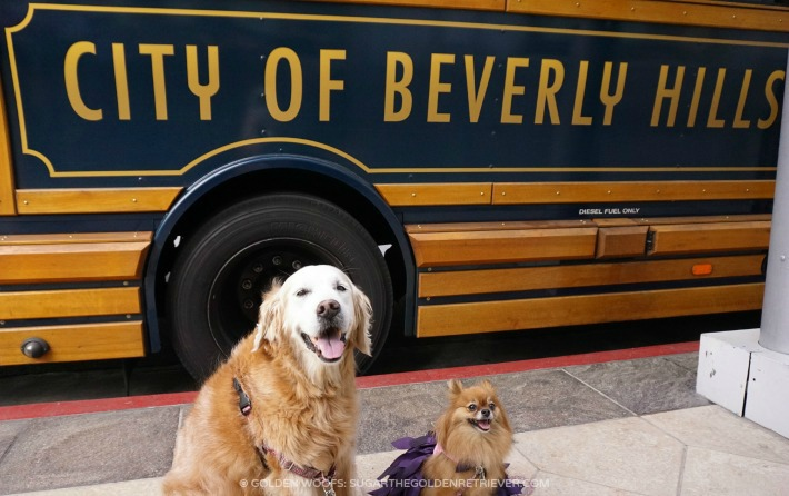 Doggy Meet-up in Beverly Hills, CA