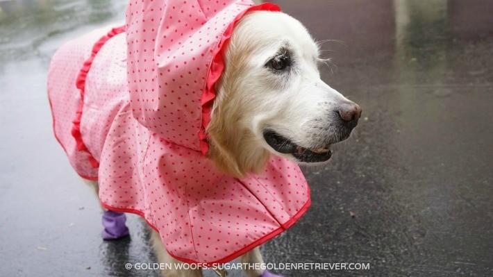 Martha Stewart Pets 2015 Spring Collection
