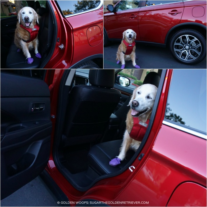 Mitsubishi Outlander Dog Approved