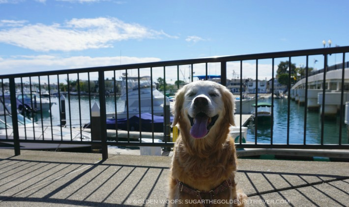 Sugar at Balboa Island Dog-friendly