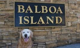 Balboa Island Dog-Friendly