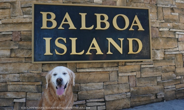 Balboa Island Dog-Friendly