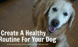 Create A Healthy Routine For Your Dog