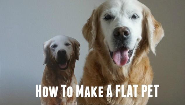 How To Make A Flat Pet