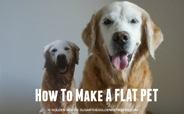 How To Make A Flat Pet