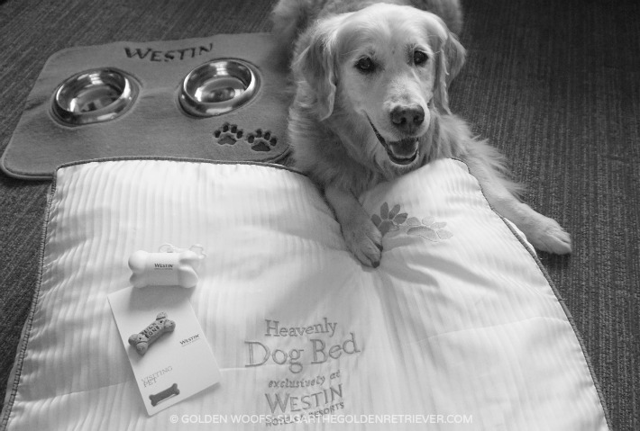#WestinDog Heavenly Dog Bed
