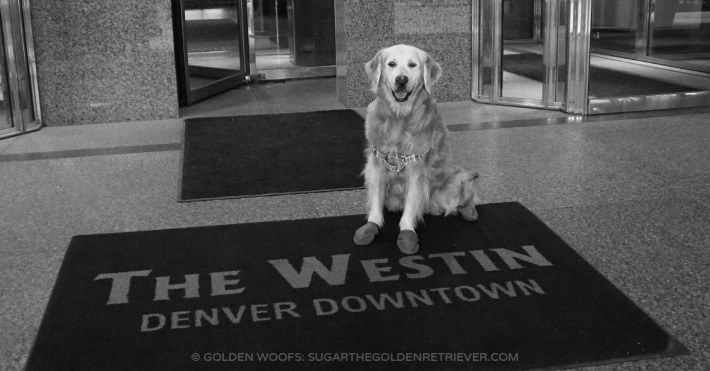 Westin Denver Downtown Dog-friendly