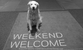 Westin Hotel Westin Weekend