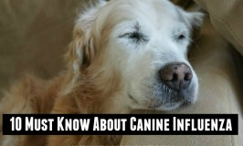 10 Must Know Canine Influenza