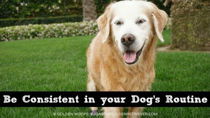 Consistency In Your Dog's Routine #PerfectWeight