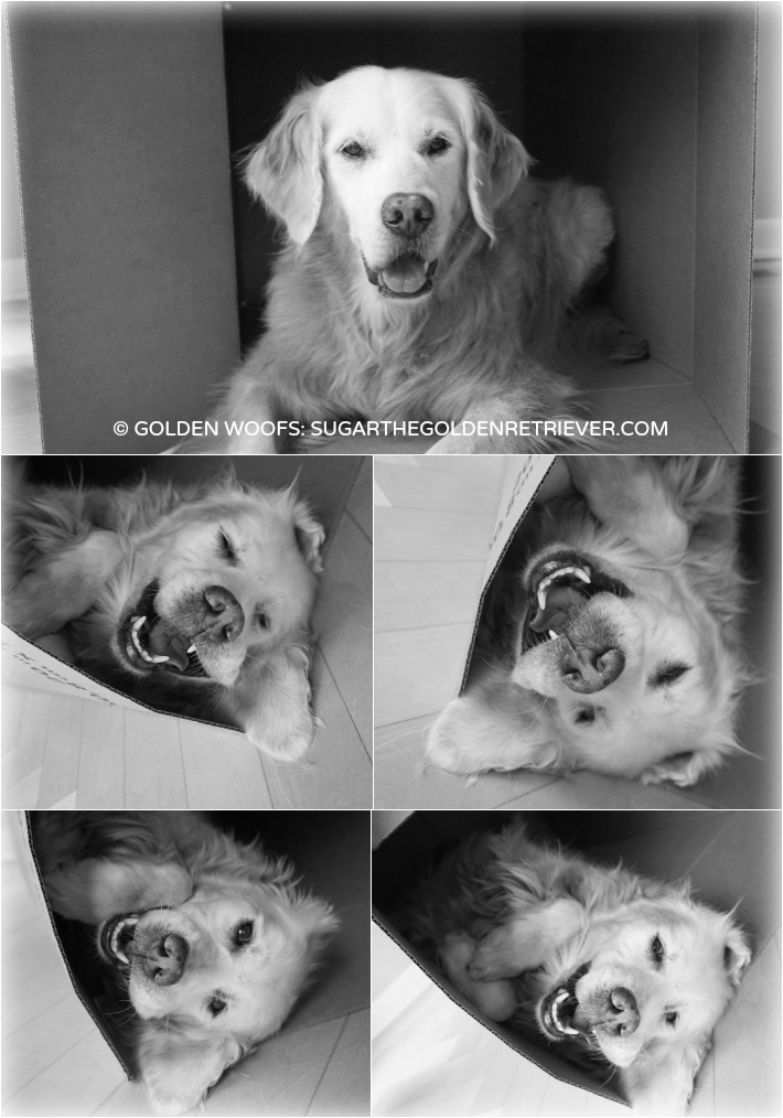 Dog In The Box