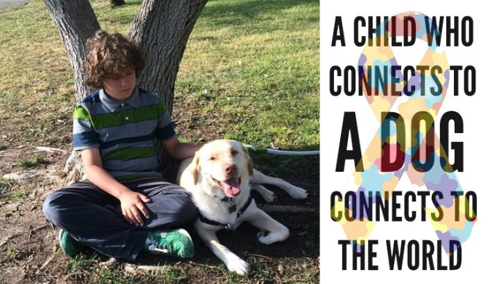 Courage, Autistic Service Dog, For Caleb