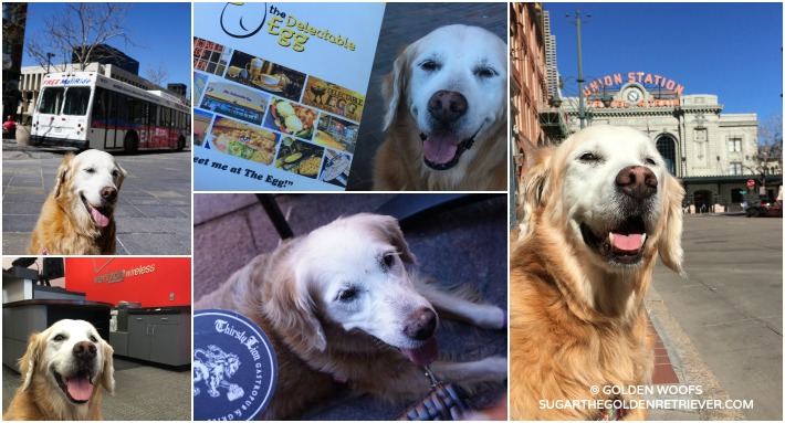 Dog-friendly Denver Downtown