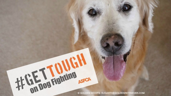 #GetTough on Dog Fighting 365 Days