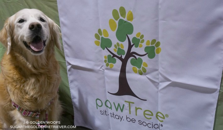 JOIN pawTree as a petPro
