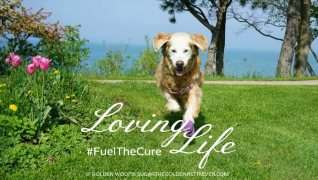 Loving Life #FuelTheCure Zukes