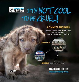 Beware Of Puppy Mill Dogs #EndPuppyMills - Golden Woofs