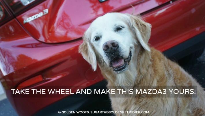 Mazda3 Dog Friendly car