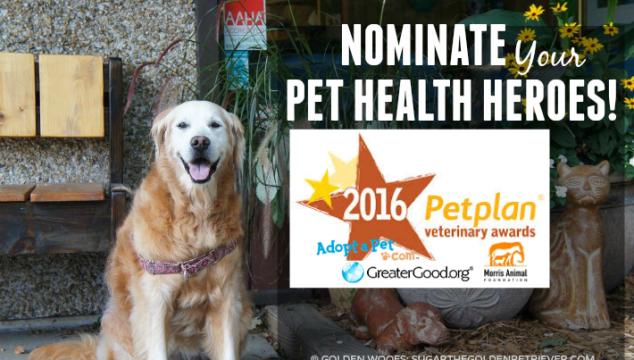 Pet Health Heroes: Petplan Veterinary Awards