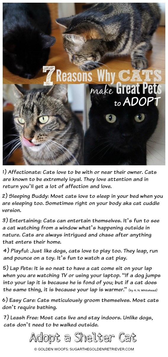 Cats are Great Pets to ADOPT